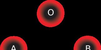 Grupo sanguíneo y alimentación