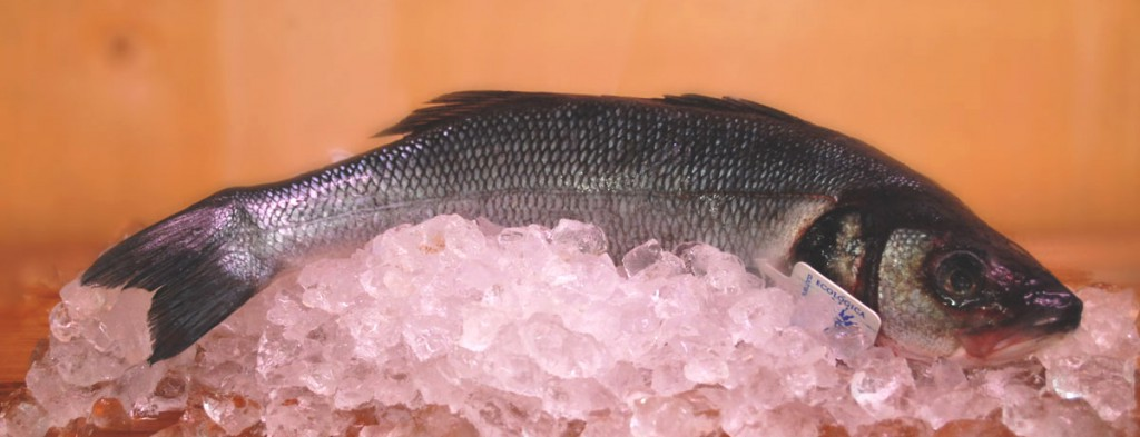 Pescado Ecológico Ecoviand